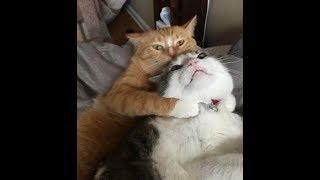 Коты приколы - чудные пушистики