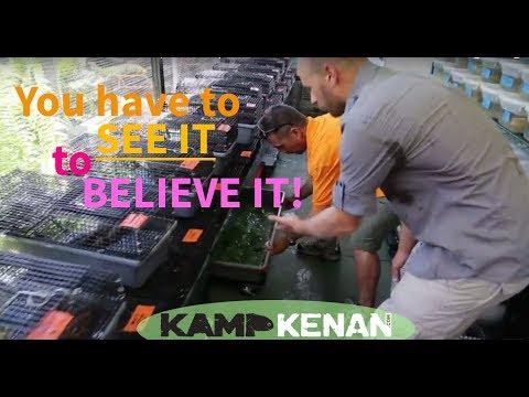 World's Craziest Turtle House! Kamp Kenan S1 Episode 14