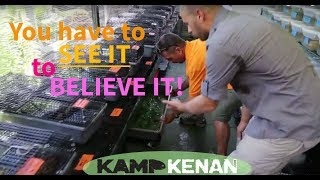 World's Craziest Turtle House! Kamp Kenan S1 Episode 14