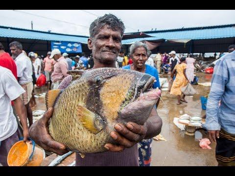 FISH MARKET | FISH WHOLESALERS IN CRAWFORD MARKET | Nashik | INDIA