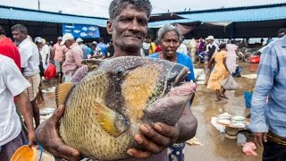 FISH MARKET | FISH WHOLESALERS IN CRAWFORD MARKET | Nashik | INDIA