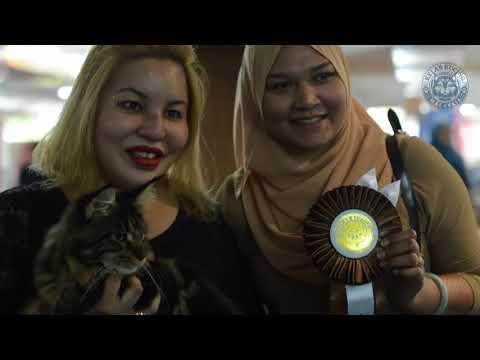 KELAB KUCING MALAYSIA | PETS LOVER FIESTA 2018 | KOMPLEKS KRAF - Part 2/4