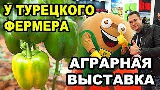 видео: Выращивание овощей. В гостях у турецкого фермера. Аграрная выставка