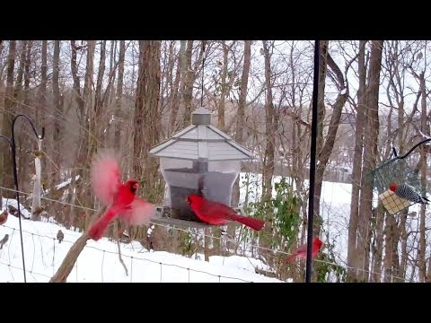Winter Birds' Feeding Frenzy  (Cats LOVE It!)