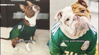 Четвероногая поддержка: фотографии собак-болельщиков заполонили соцсети