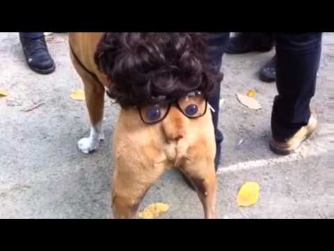 KidRock Dog Mix