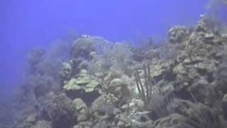 Morsko dno