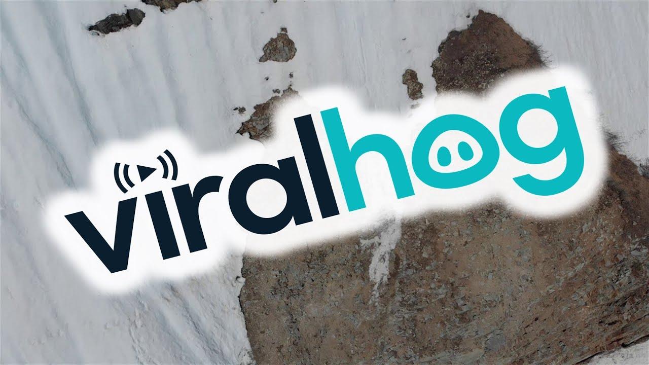فيديو درامي يصور صغير الدب وهو يحاول تسلق منحدر مغطى بالثلوج للحاق بأمه