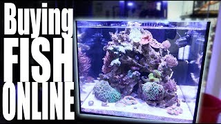 ordering-fish-online-new-fish-for-my-reef-tank-tyler-nolan