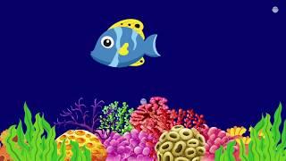 relaxing music for kids aquarium