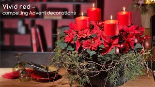 Craft project: Planted Advent wreath with poinsettia