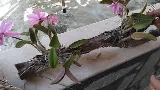 O Que Fazer Depois Da Floração Da Sua Orquídea