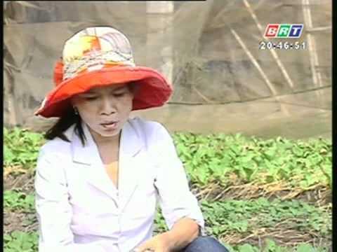 Kỹ thuật phòng trừ bọ nhảy hại rau xanh 25 2 2012