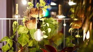 വീട്ടില് എളുപ്പം വളര്ത്താവുന്ന Indoor plants.