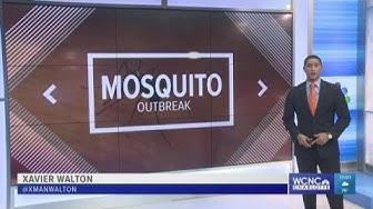 'Mosquito-pocalypse is in full effect': NC hit by blood-sucking pest outbreak