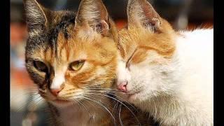 Коты-воители.Ролевая.племя Багряного Заката.
