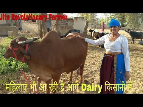 Progressive Women Dairy Farmer इन महिला Dairy किसान ने किए पशुओ में ये बदलाव, घाटे को बदला फायदे मे
