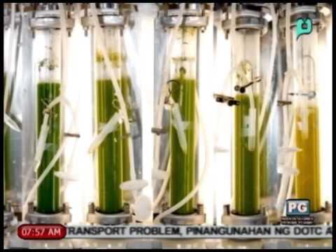 GMB - Tutok Kalikasan: Algae bilang 'alternative fuel source' [08/21/14]