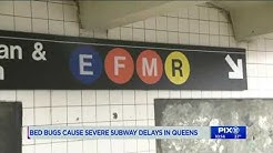 Bed bugs cause severe subway delays in Queens: MTA