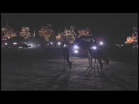 Christmas Lights at Hollywild Animal Park - YouTube