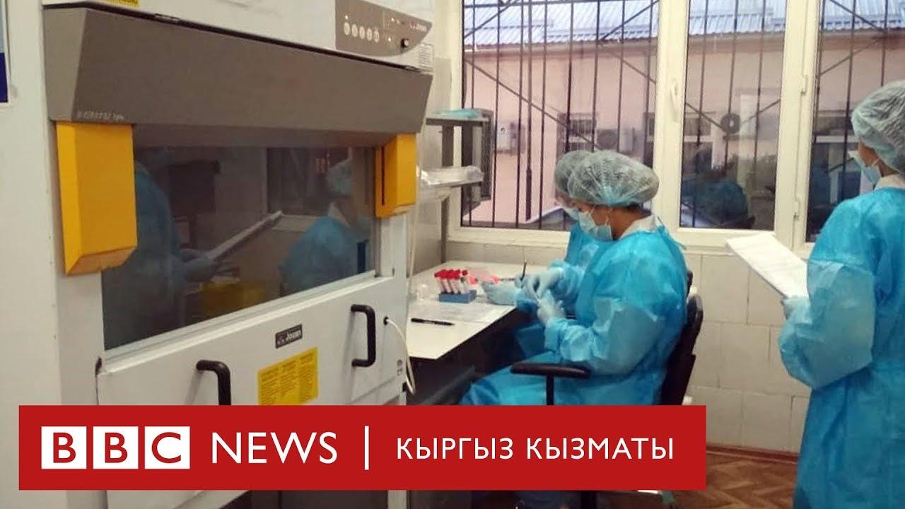 Коронавирус: тез текшерчү тест түйшүктү жеңилдетеби? - BBC Kyrgyz