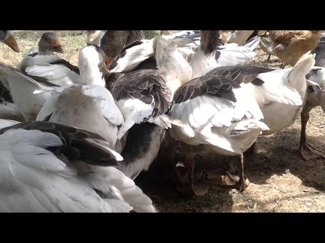 Ev Qazi ve it - yemek davasi 2016