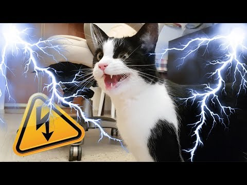 Mad CAT: Fury Road