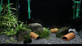 [10분 물멍] 2자반 어항, 오렌지(썬키스트) 새우와…