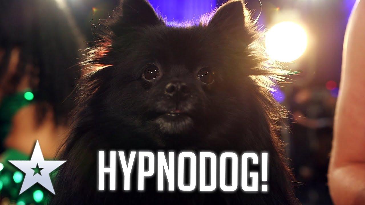 DOG HYPNOTIST! I Auditions I BGT Series 9