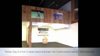 Reese: Day 6 Of 3-week Board/train! K9 Training Northern Virginia