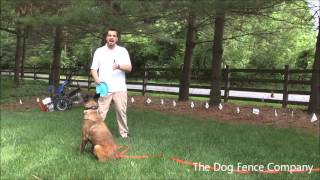 In-ground Dog Fence Installation | Columbia, Md