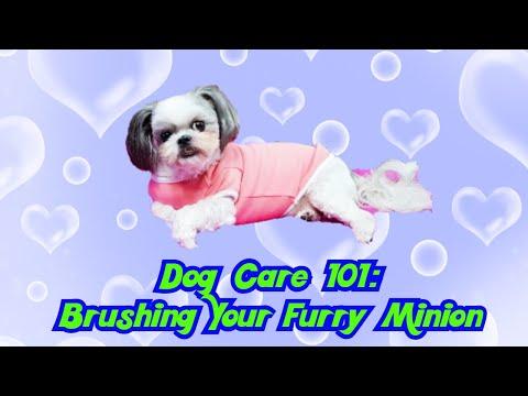 KimchiRednecks do Dog care part 2