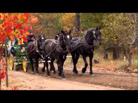 Horse Drawn Antique Road Grader