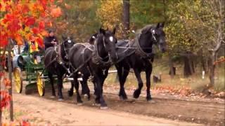 Horse Drawn Antique Road Grader