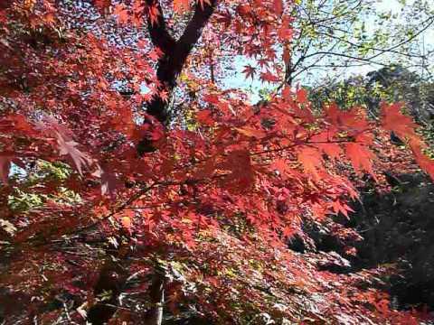 live in tokyo japan Nerima-ku Shakujii-Park 紅葉 1050325