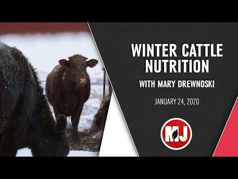 Winter Cattle Nutrition | Mary Drewnoski | January 24, 2020