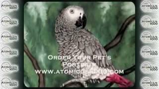 Жако или серый африканский попугай