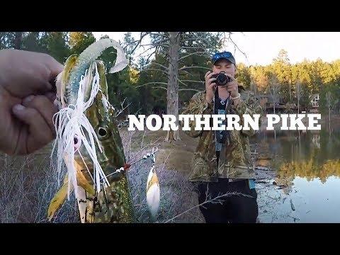 Arizona Northern Pike Fishing   Flagstaff, Arizona