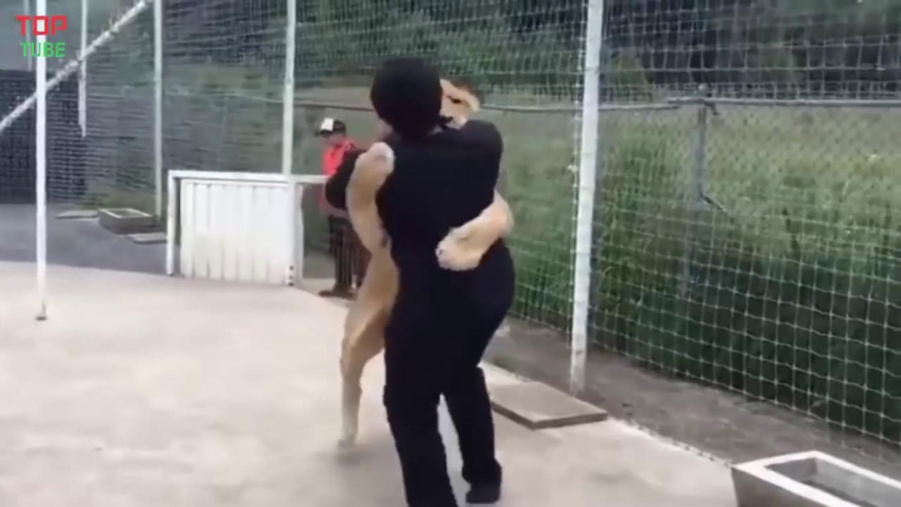 Tình yêu giữa con người và động vật