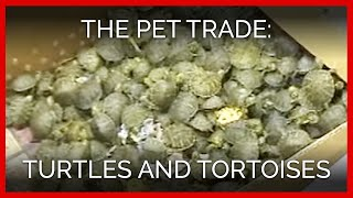 The Pet Trade: Turtles and Tortoises