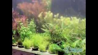 Купить аквариумные растения в СПб