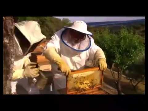 Abejas, colmenas y miel en Colmenar de YouTube · Duración:  4 minutos 32 segundos  · Más de 4.000 vistas · cargado el 23.05.2014 · cargado por Telemadrid