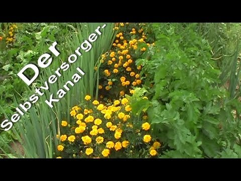 Selbstversorger-Gartenrundgang Anfang August