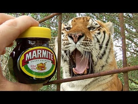 Do Tigers Like MARMITE?