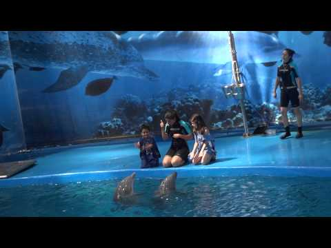 Dolphin Show at Barcelona Aquarium