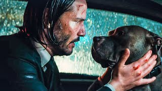 You39re A Good Dog Scene - JOHN WICK 3 2019 Movie Clip