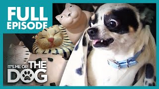 The Cat Replacement: Niles | Full Episode | It's Me or the Dog