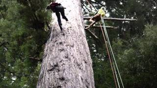 Climbing the Great White Redwood