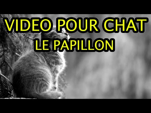 Video pour chat - Le papillon - Version 15 mn