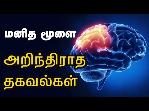 Human Brain Facts and Answers - How the human brain works? - Health Tips in Tamil